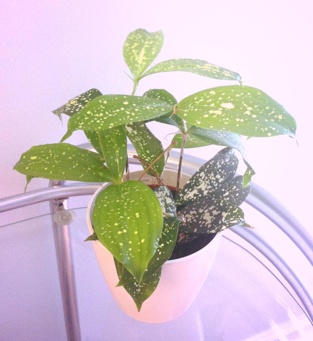 Whyyourbusinessneedsplants