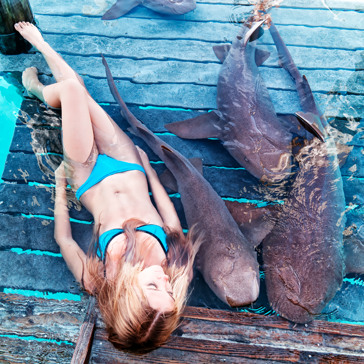 sharks122.jpg