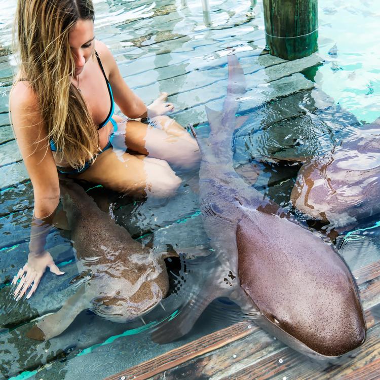 sharks14.jpg