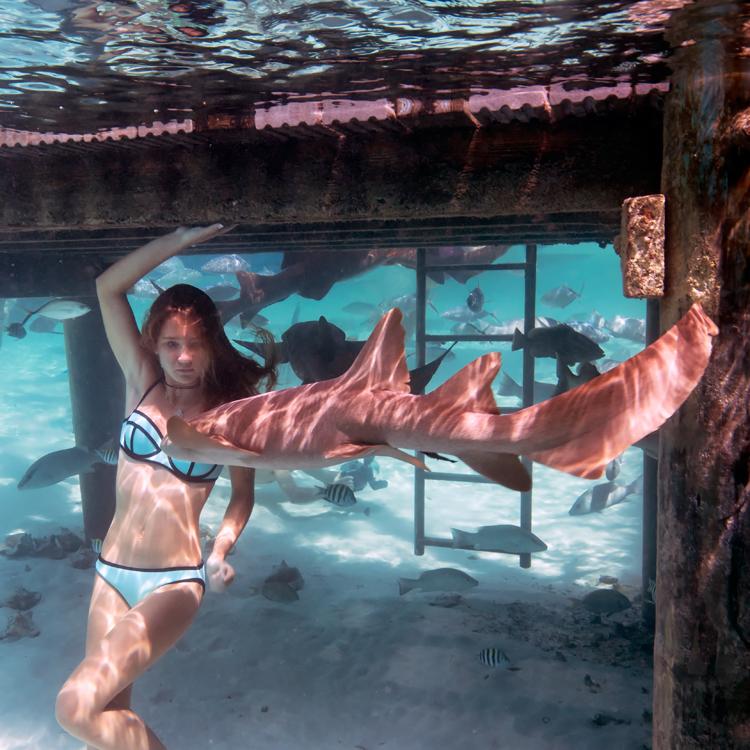 sharkss321.jpg