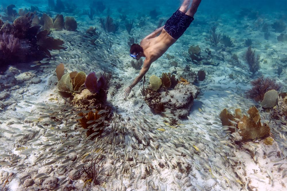 underwater_reef2
