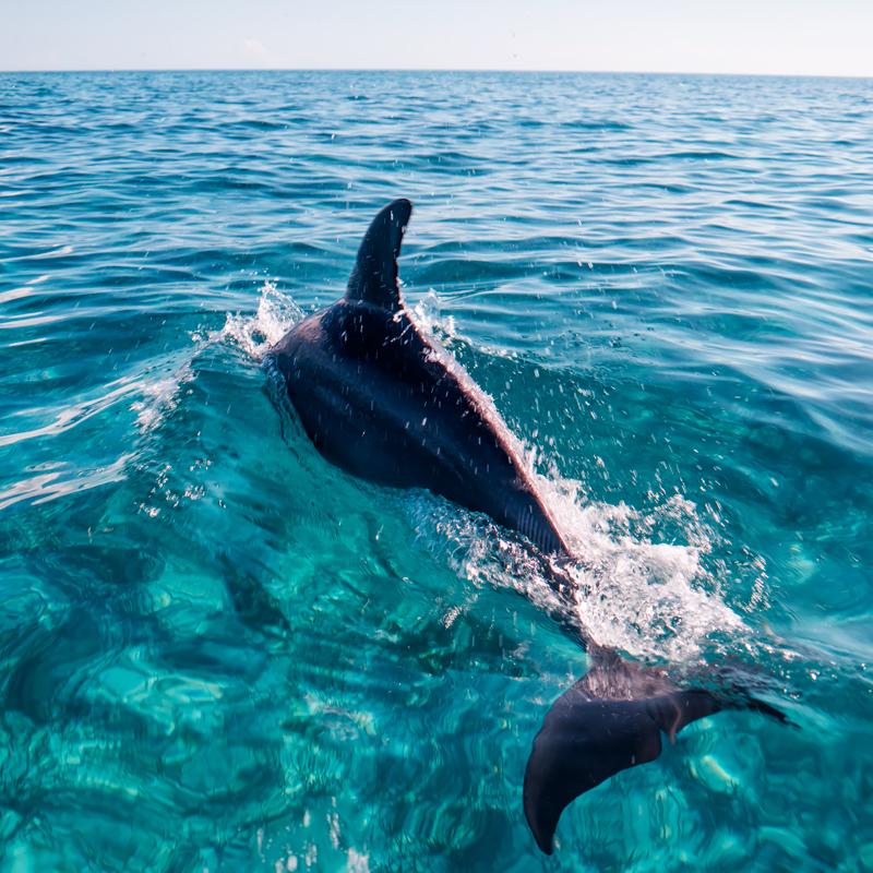 dolphins112s.jpg