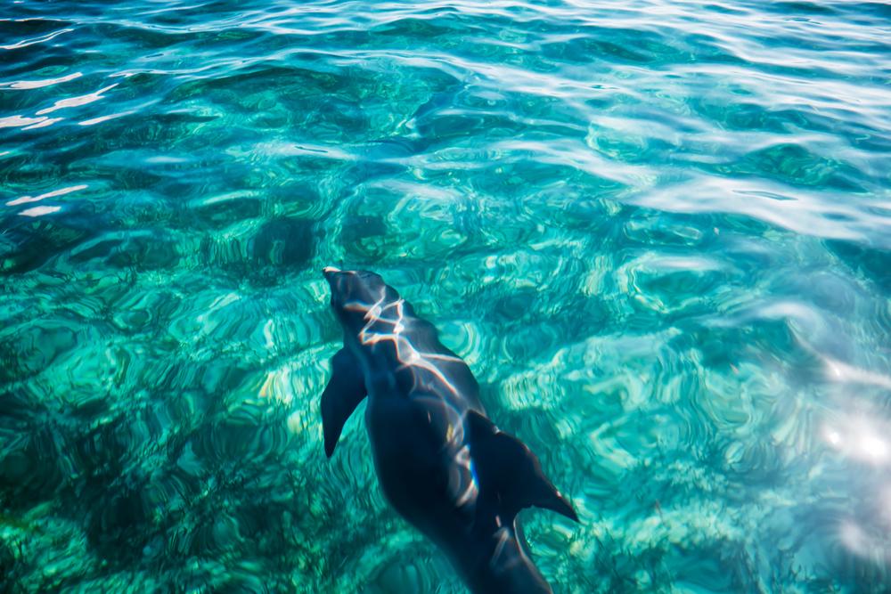 dolphins123.jpg