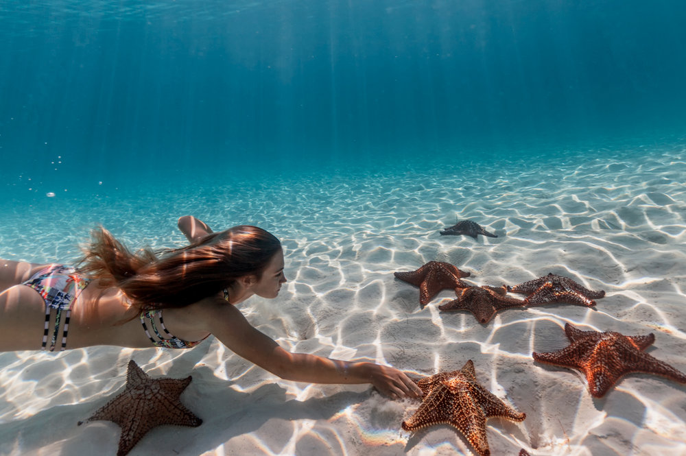 starfish217.jpg