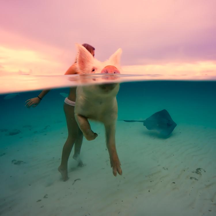 bahamas005.jpg