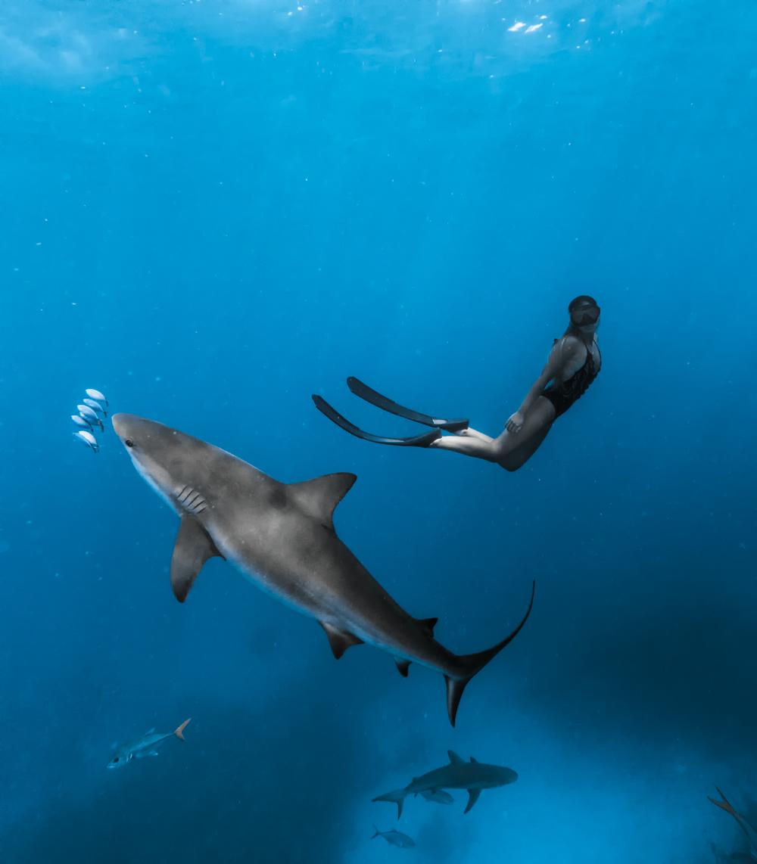 exuma_bnt_sharks1010web.jpg
