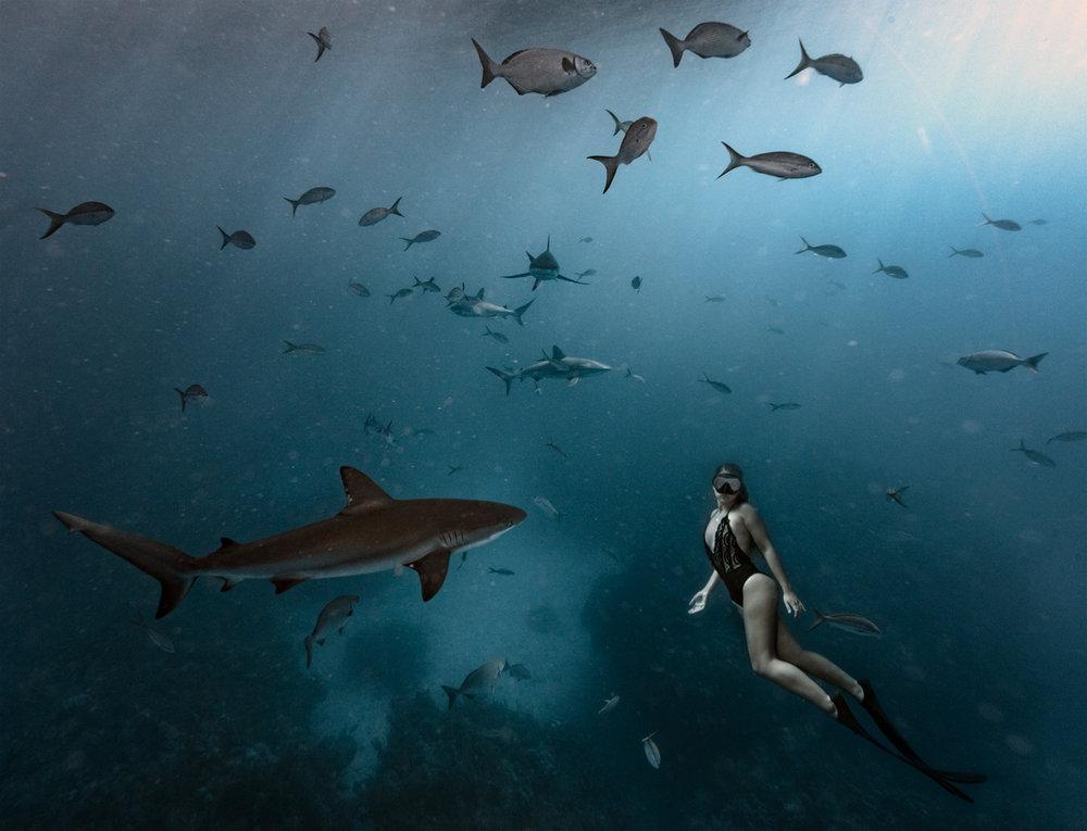 exuma_bnt_sharks914a.jpg