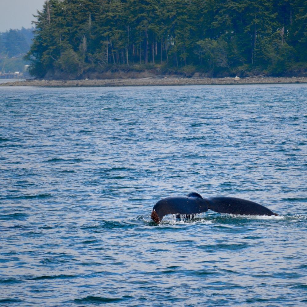 Whale_watching_orcas_Island.jpg