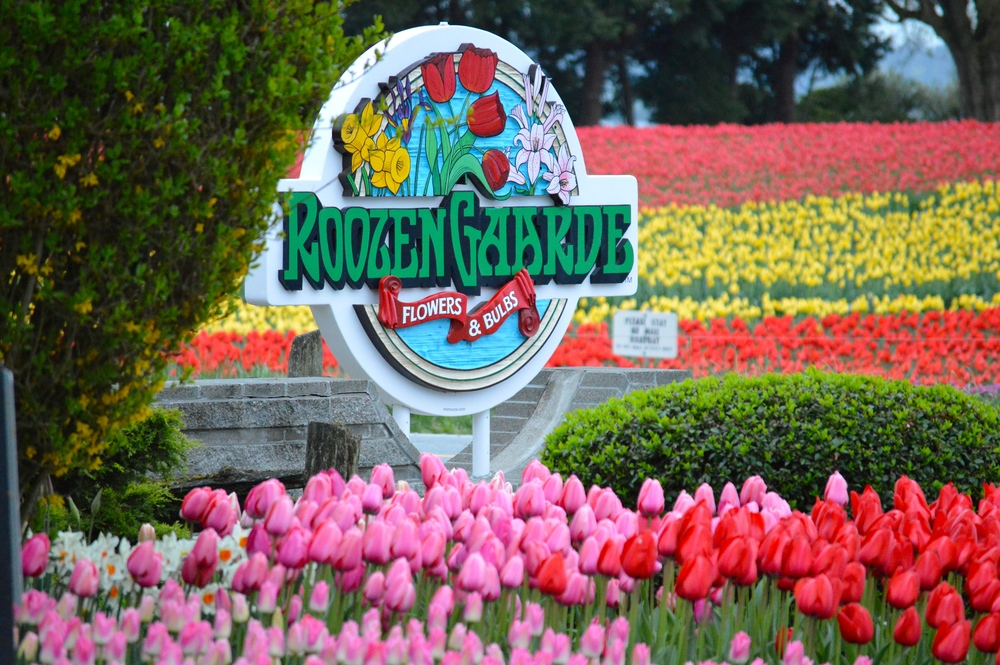 Roozengaarde_Sign_Tulips.jpg