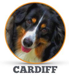 Cardiff_Circle.jpg