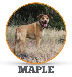 Maple_circle.jpg