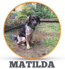 Matilda Circle.jpg