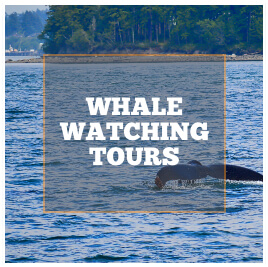 WhaleWatchingToursOrcas.jpg