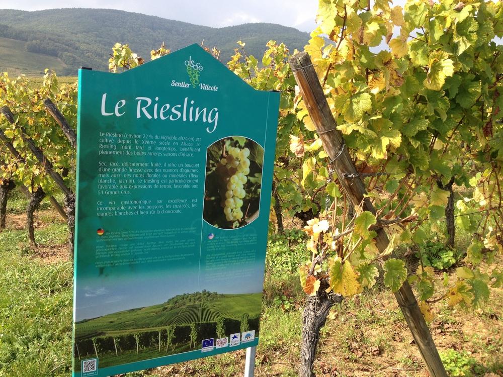 Los rótulos de Sentier Viticole (ruta del vino en francés) informan al visitante sobre los tipos de uva y el proceso de elaboración. Foto: Bruny Nieves