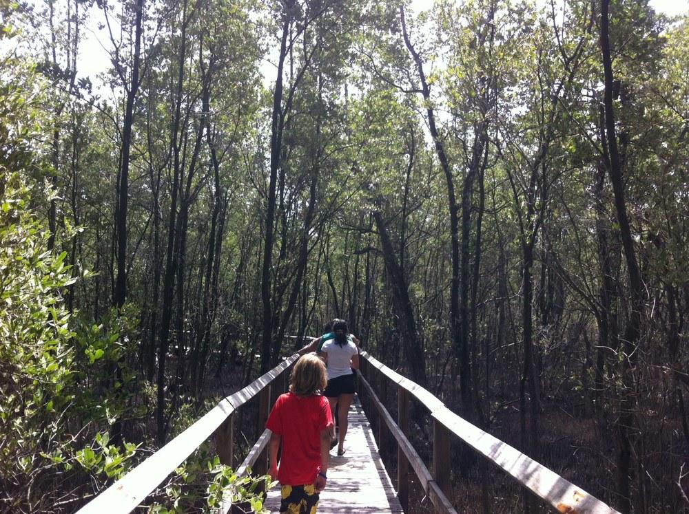 Continuamos embrujados con la belleza natural de Guayama en la Reserva Forestal Aguirre; donde encuentras veredas interpretativas, muelles para kayaks, torre de observación y área para acampar. Foto: Bruny Nieves