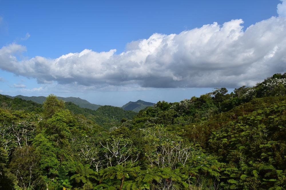 El paisaje verde de la montaña con el sonido siempre presente del coquí es toda una experiencia campestre. Foto: Alejandro Rodz. Rojas
