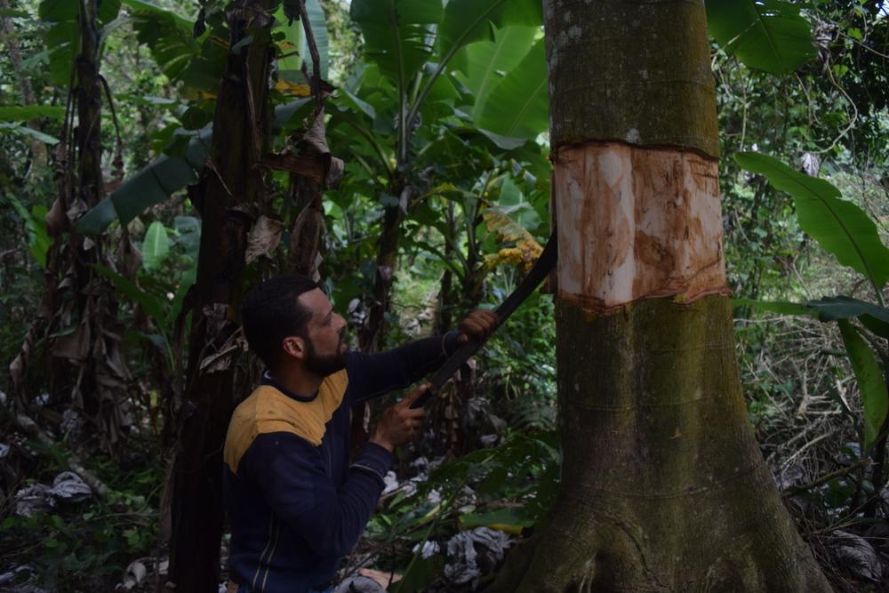 Carlos haciendo espacio para sembrar. Foto: Alejandro Rodz. Rojas