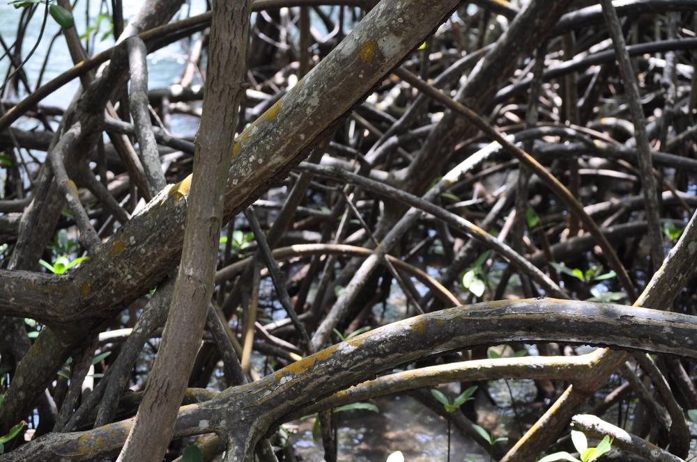 El ecosistema de esta reserva es complejo, en un solo lugar se encuentran: bosque seco, manglares, matorral costero y el sistema de cuevas. Foto: Pamy Rojas