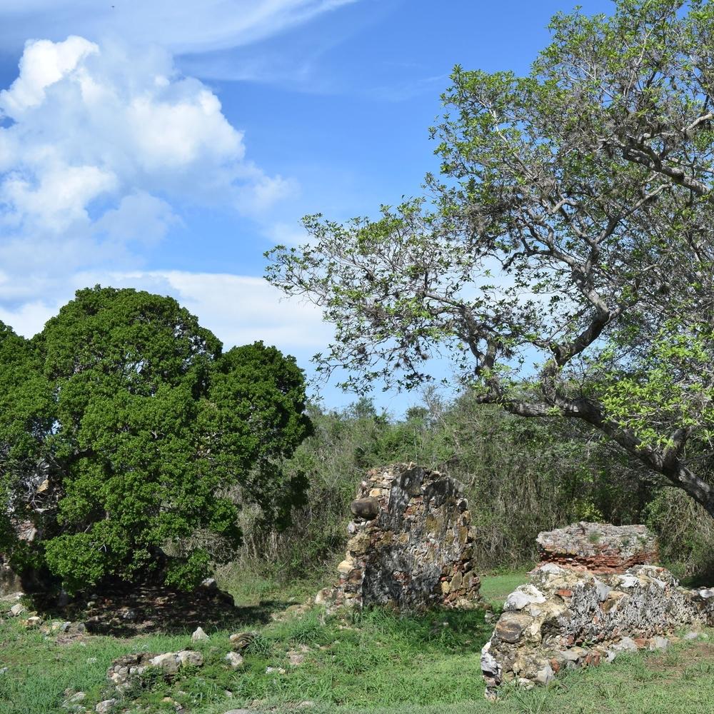 Para el siglo XIX, la Hacienda la Romana se dedicaba al cultivo de la caña de azúcar y también a la ganadería. Foto: Alejandro Rodz. Rojas