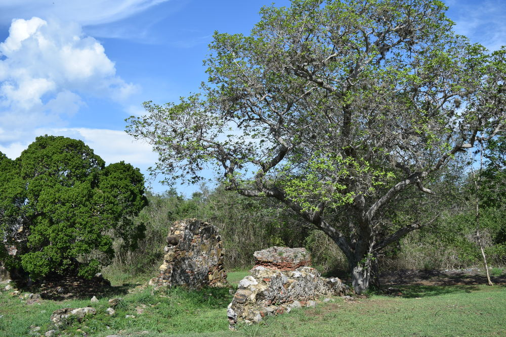 Towards the 19th century, Hacienda La Romana was dedicated to sugar cane harvesting and livestock. Photo: Alejandro Rodz. Rojas