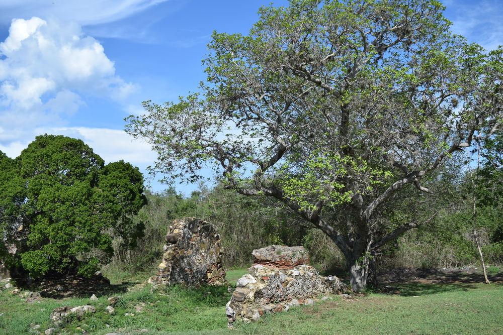 Towards the 19th century, Hacienda La Romana was dedicated to sugar cane harvesting and livestock. Photo: Alejandro Rodz. Rojas
