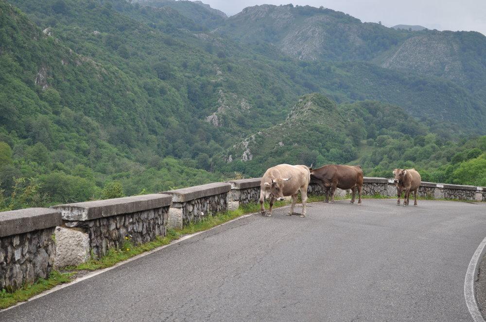 Con su permiso, ¿podemos pasar?Lagos de Covadonga,Cangas de Onís.