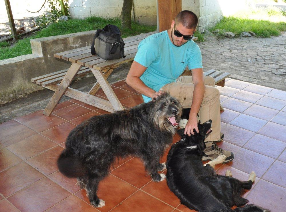 Harry, Bollie y Nezca eran los nombres de los perros pastores.
