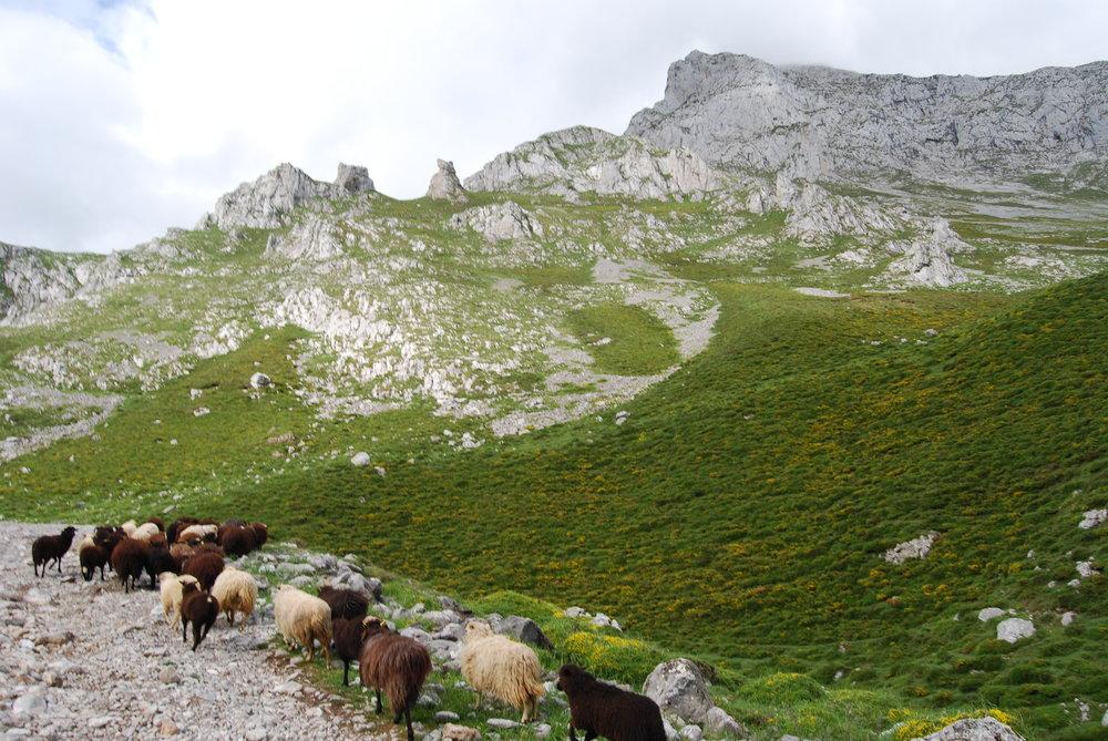La ruta que hicimos por los Picos de Europa duró todo un día.