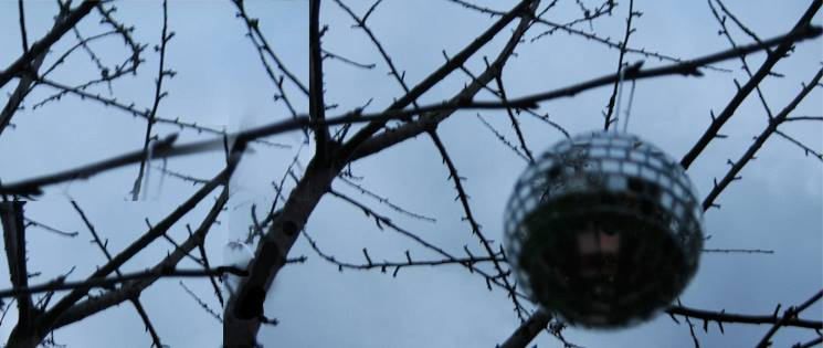 The first Disco Tree, Dublin, 2007