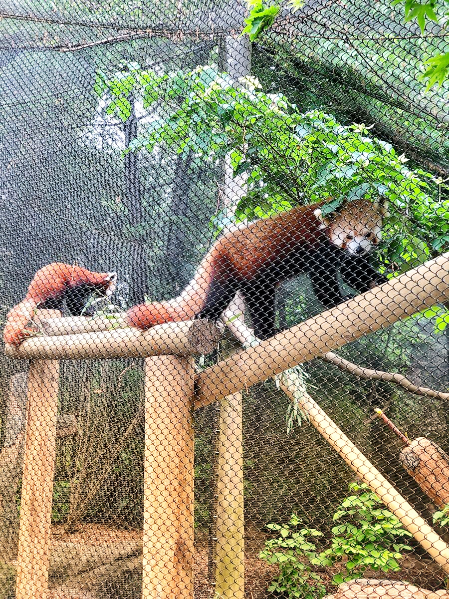 Zoo Knoxville, Things to do in Knoxville, TN via ThoseCrazyNelsons.com
