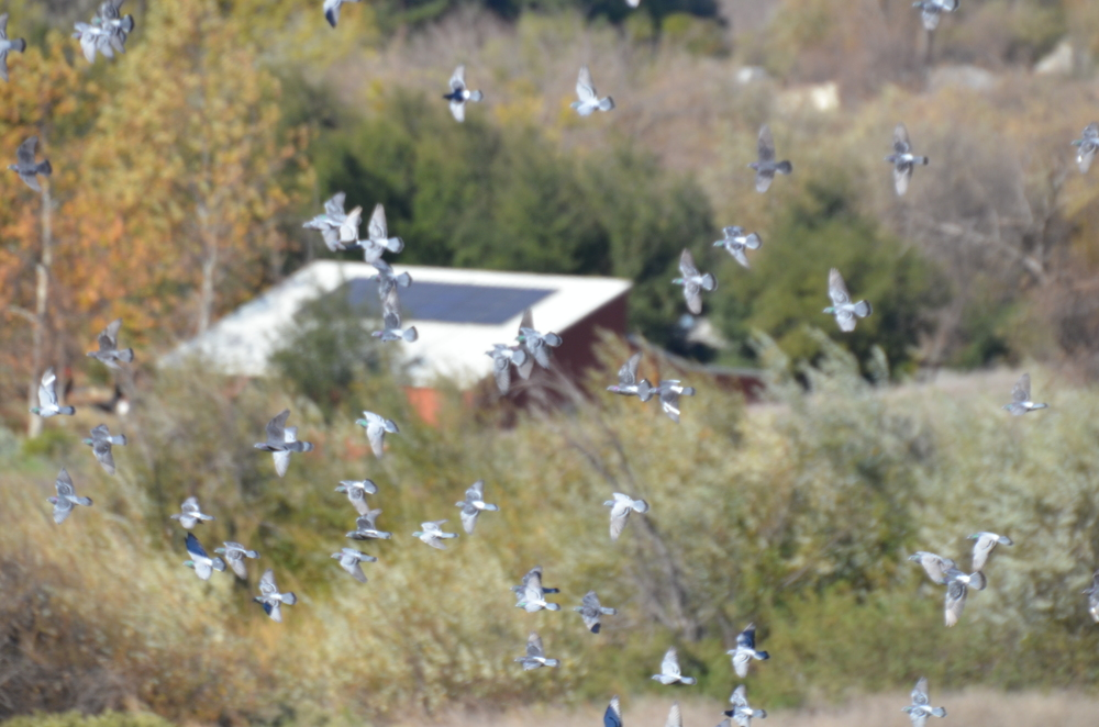 Chumash Indian Center, Pt. Mugu State Park, Thousand Oaks