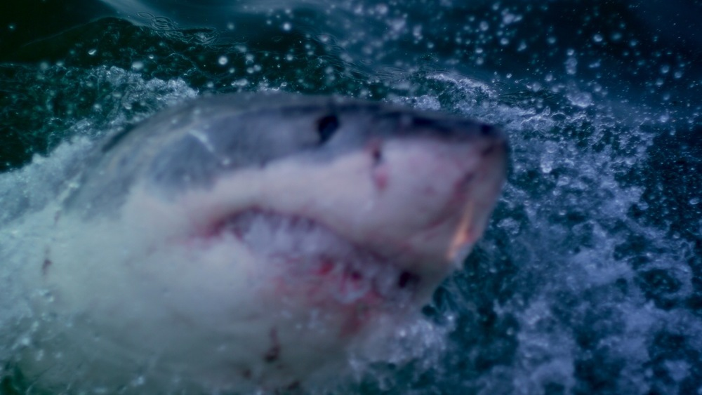 Copyright © 2012, A+B=FilmUnit. All rights reserved. Great White.jpg