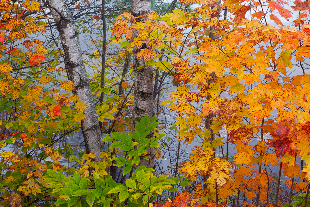 Vermont II