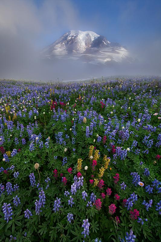 Rainier Foggy Morning