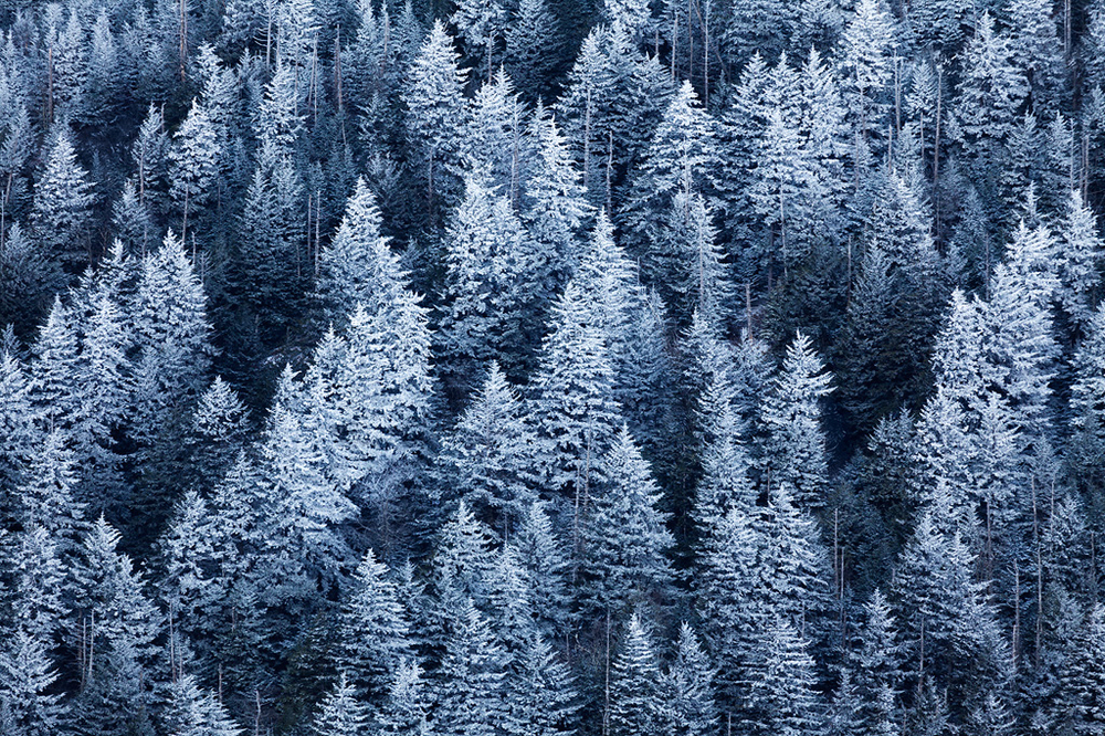 Frosty trees, Great Smoky Mountains National Park