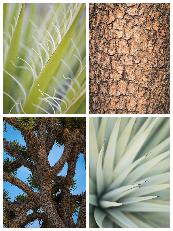 Abstract renditions of a mojave yucca, Joshua tree bark, limbs of a Joshua tree, and Joshua tree tines.
