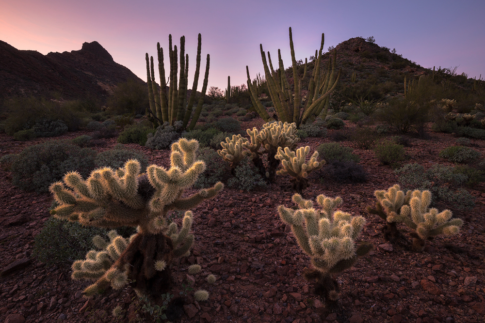 Twilight Symphony, Organ Pipe Cactus National Monument