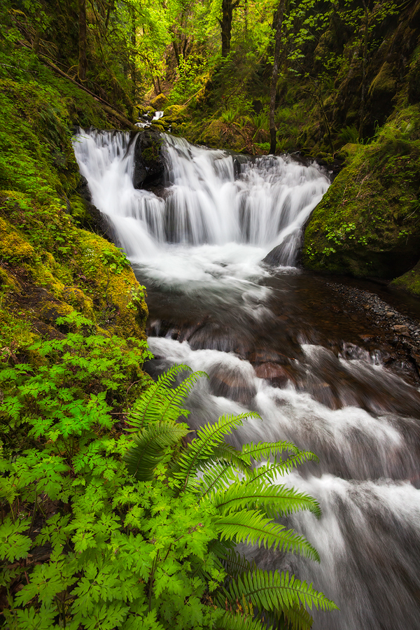 Emerald Falls, Columbia River Gorge. Last time I visited this location, this fern and much of this foliage was gone due to erosion from photographers crawling down to the base of the falls.