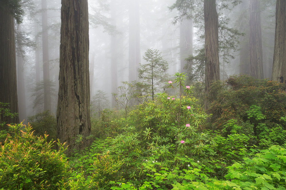 3. Redwoods National Park, California