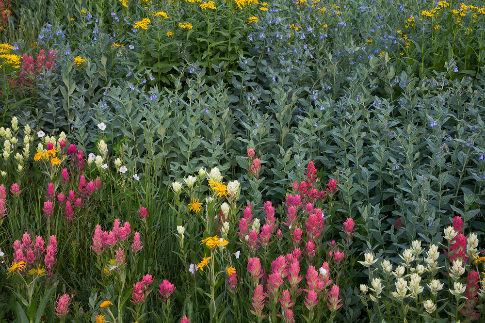 7. Alpine Garden, Colorado