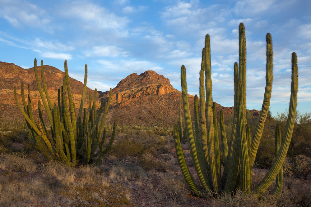 Organ Pipe Cactus National Monument in Arizona, (c) Ron Coscorrosa.