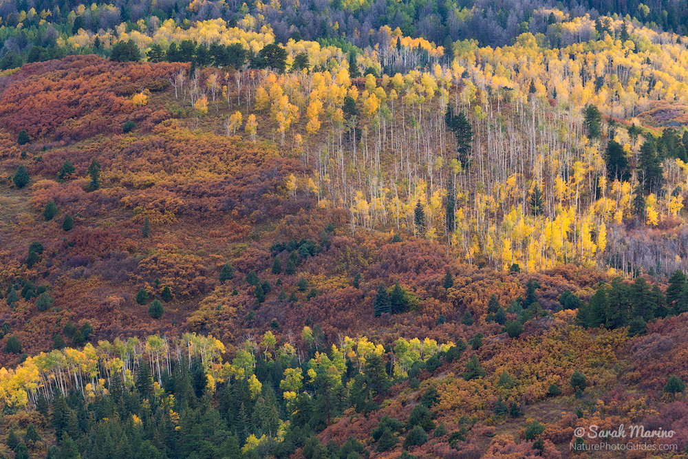 A colorful mix of fall foliage in Colorado's San Juan Mountains.