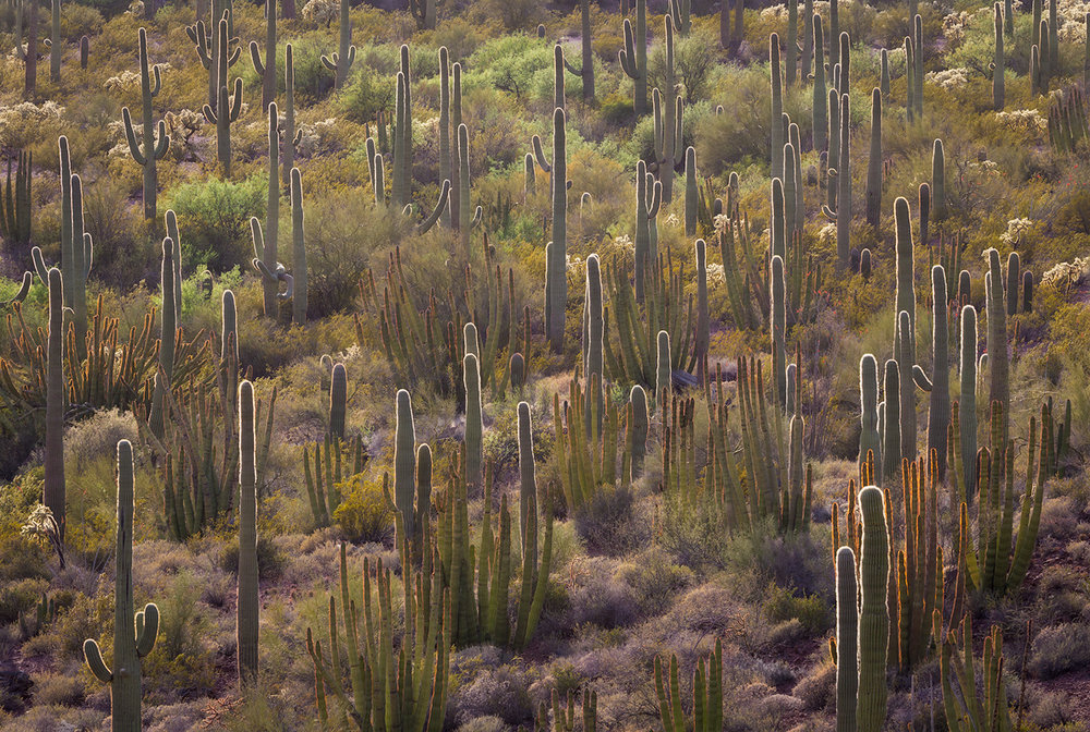 This is the kind of scenery you can find at Organ Pipe National Monument in Arizona. This park's southern border is our border with Mexico.
