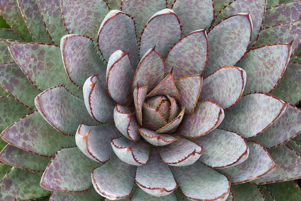 Sumptuous Succulent