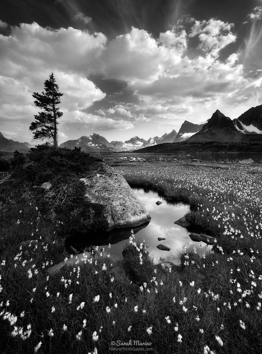 Sarah-Marino-Canadian-Rockies-Jasper-National-Park-Blac-White-1200px.jpg