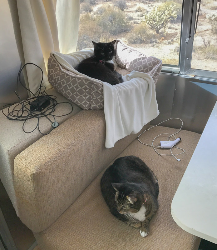 Office cats and accessories - our booster and a 12V laptop charger.