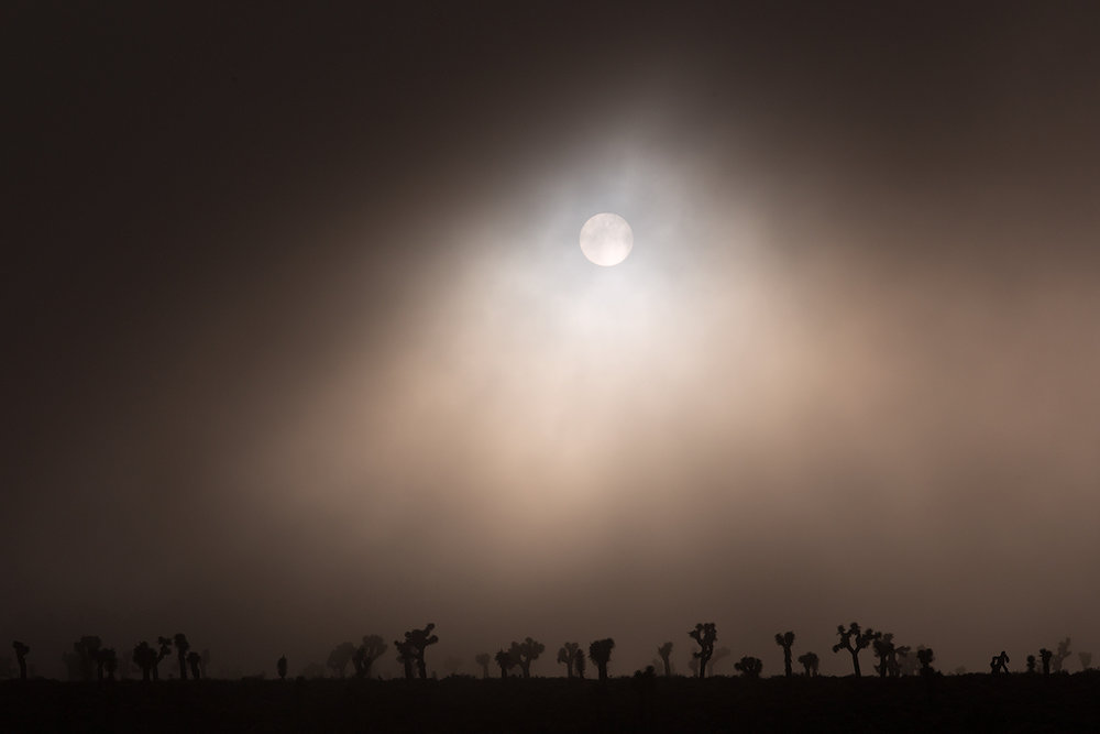 """Sun Dance"" - The sun momentarily breaks through a thick fog layer in a Joshua Tree forest."