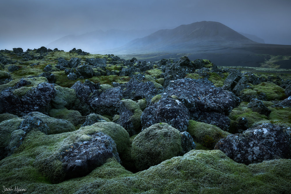Sensitive mosses growing at a remote lava field in Iceland. Moss at more popular stops has been completely worn away by visitors and photographers traveling off the established trails.