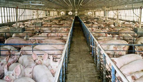 farmsanctuary.org photo