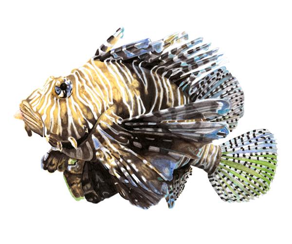 spanish_lionfish.jpg